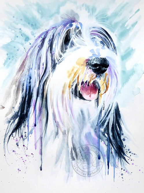 """Bearded Collie """"Max"""""""