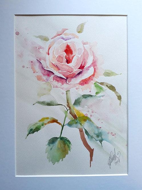Rose - Original Watercolour