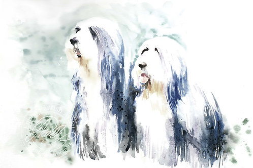 "Bearded Collie Pair ""Frank and Millie"""