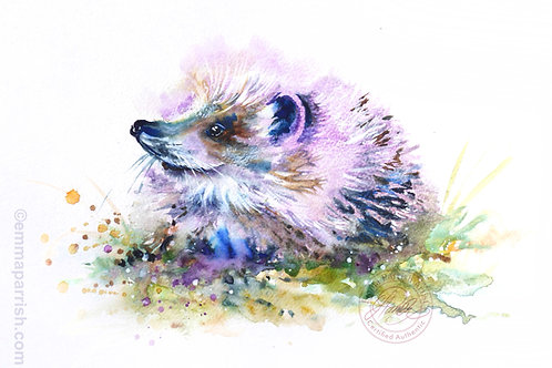 "Hedgehog ""Miranda"""