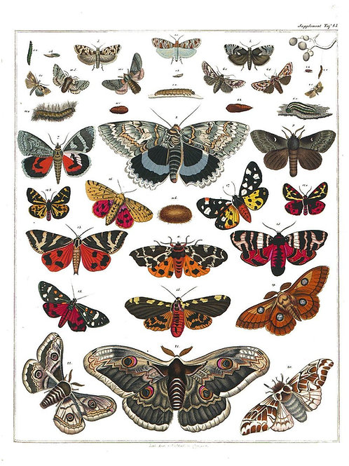 Entomology Chart Print-Number 01
