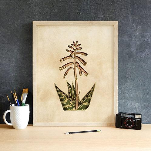 Botanical Print-No. 012