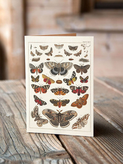 Entomology Chart Print-Number 01-Blank Note Card