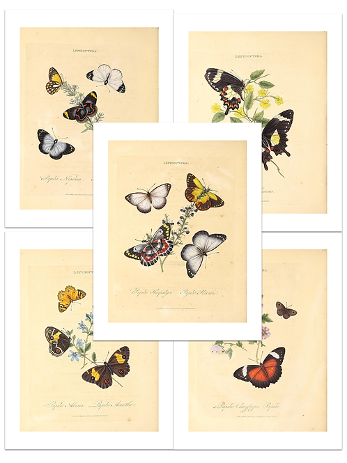Vintage Butterfly Paper Pack No. 40353, Printable Paper Pack