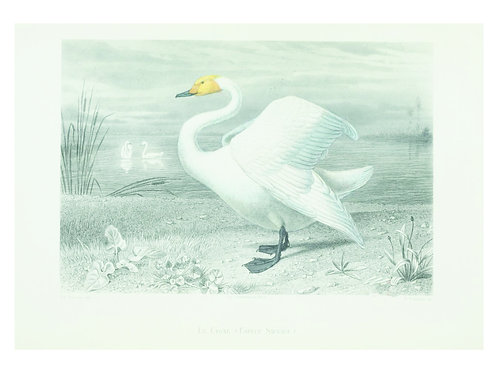 Bird Print No. 93