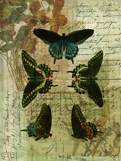 Nature Collage No 008