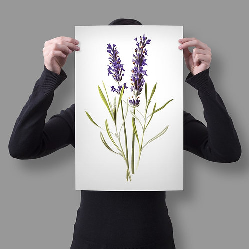 Botanical Print No. 999