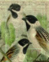 bird-33352.jpg
