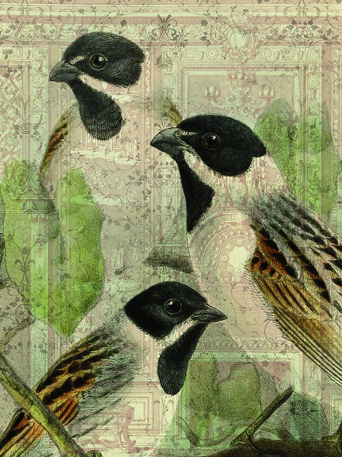 Bird Print No. 33352