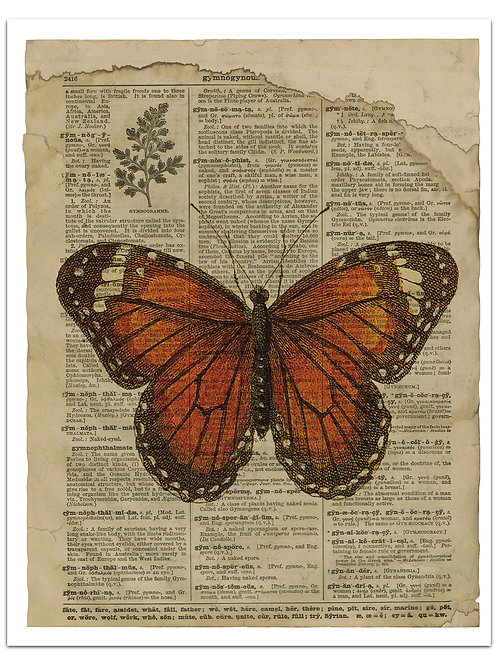 Butterfly Background Page Sheet- No 423016-Digital Download