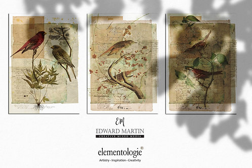 Bird Collage Print SET OF 3 No. 1191 - Sizes: 4x6, 5x7, 8.5x11, 16x20, 1