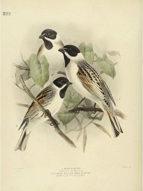 Bird Print No. 33357