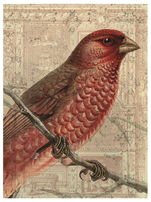 Bird Print No. 33353
