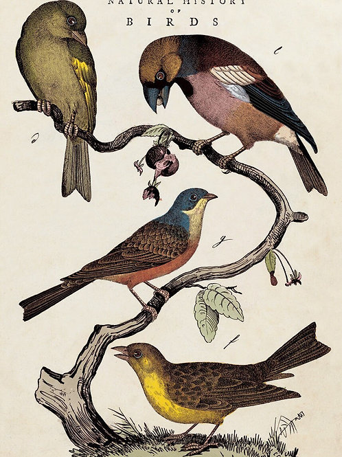 Natural History of Birds