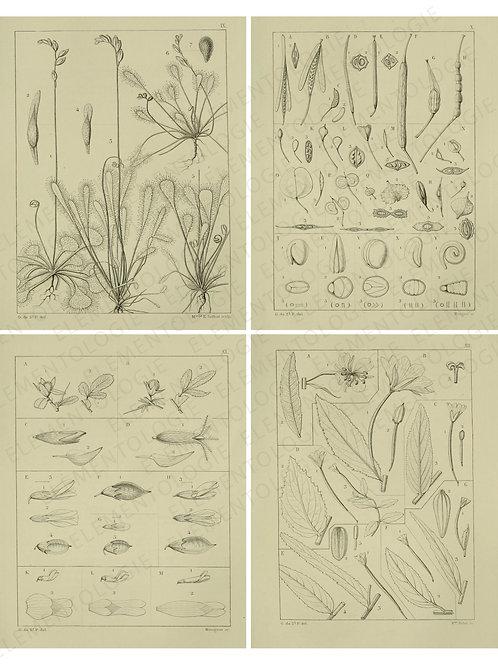 Printable Collage Sheet No 009
