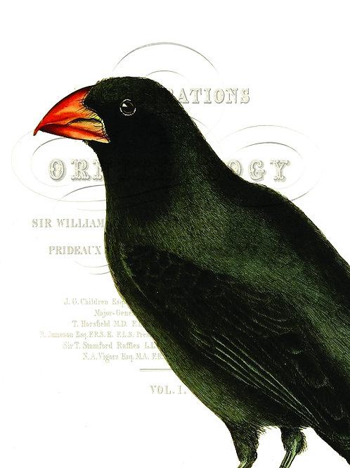 Bird Print No. 90-Blank Note Card