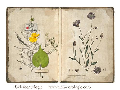 Botanical Junk Journal Double Page Sheet- No 123031-Digital Downl