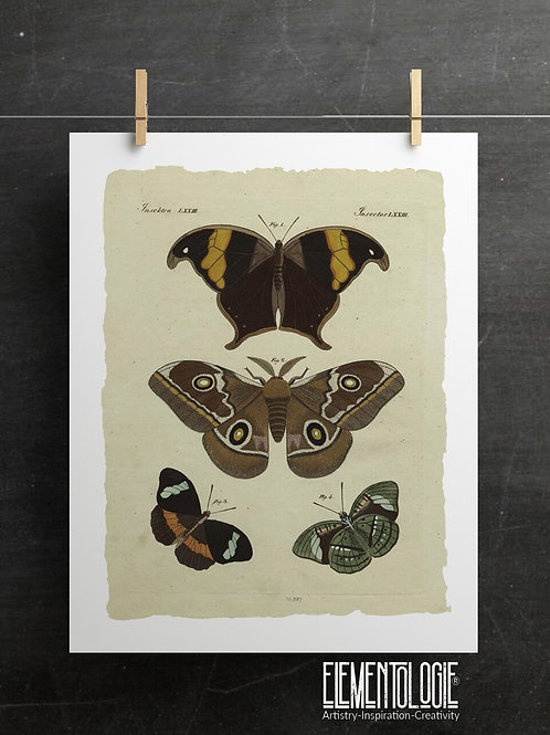Antique Insect Print-No. 902