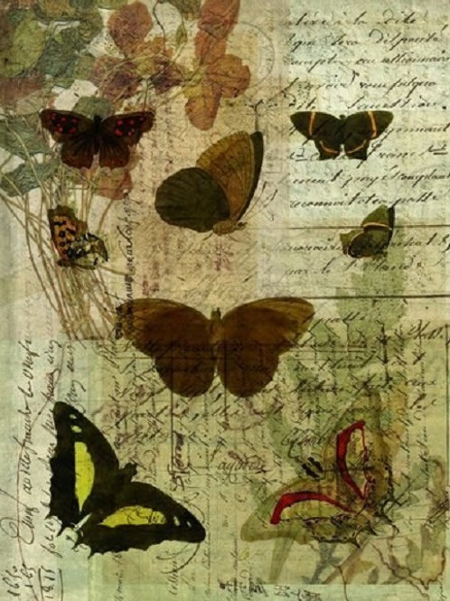 Butterfly Collage No 003