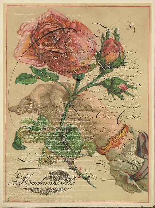 Botanical Print No. 104