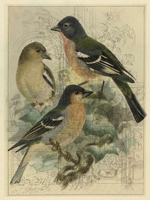Bird Print No. 33356