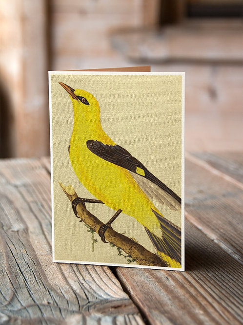 Bird Print-No.33363-Blank Note Card