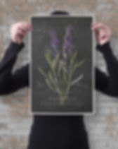 french-botanical-chalkboard-01-poster-11