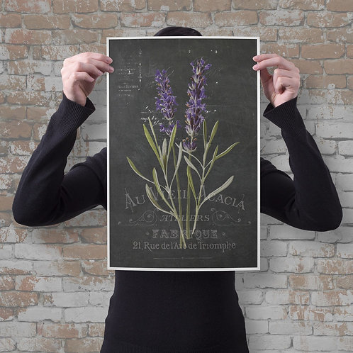 French Botanical Print No. 01-Chalkboard