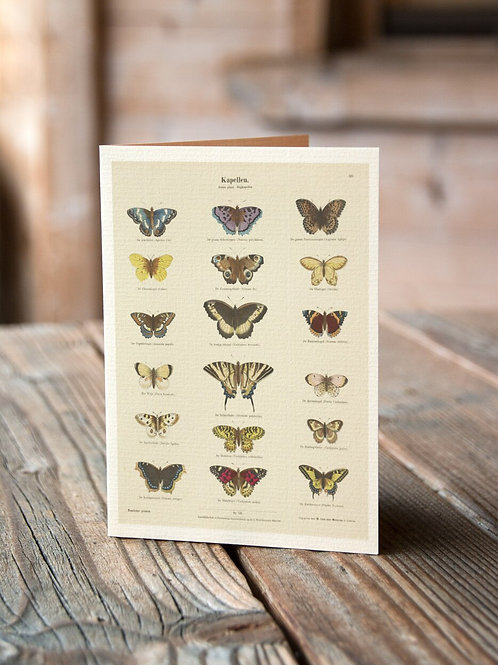 Entomology Chart Print-Butterflies -No.88544-Blank Note Card