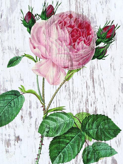 Botanical Printable print No 021