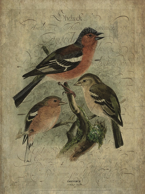 Bird Print No. 33358