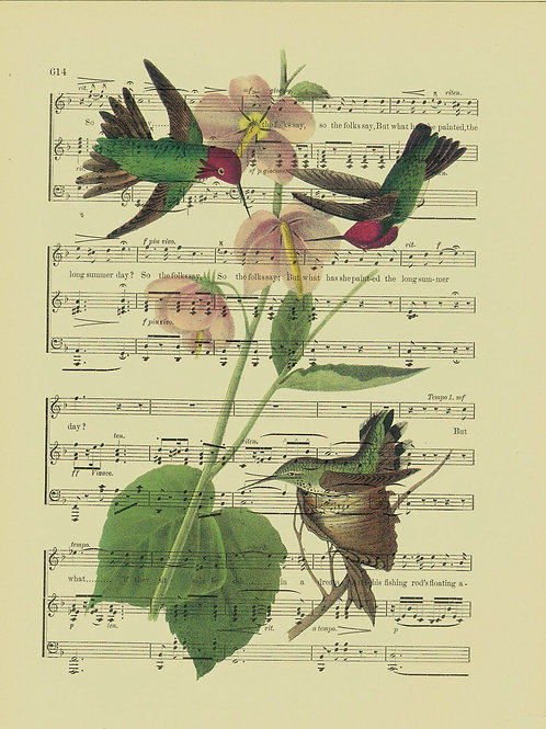 Bird-Vintage Book Page Art Print No. 17