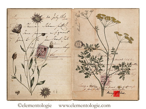 Botanical Junk Journal Double Page Sheet- No 123024-Digital Downl