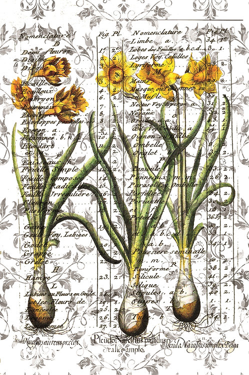 French Botanical Print No. 16