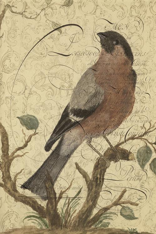 Bird Collage Print-No. 003