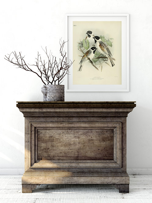 Bird Collage Print-No.33357