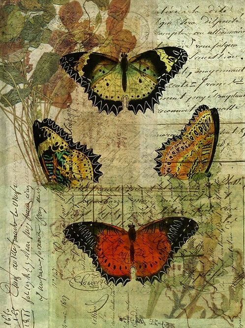 Butterfly Collage No 002