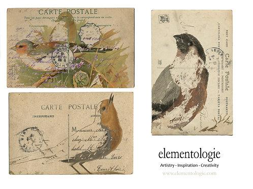Vintage Bird French Postcard Sheet- No 9007-Digital Collage Sheet Download