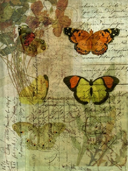 Butterfly Collage No 004