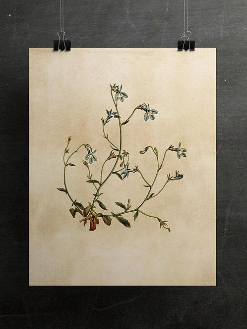 Botanical Print-No. 013