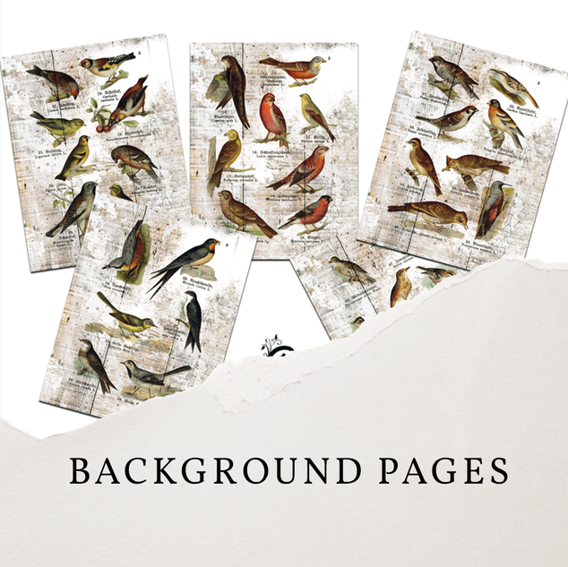 BACKGROUND PAGES.png