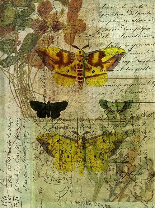 Nature Collage No 006