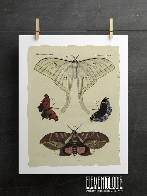 Butterfly Printable No 901