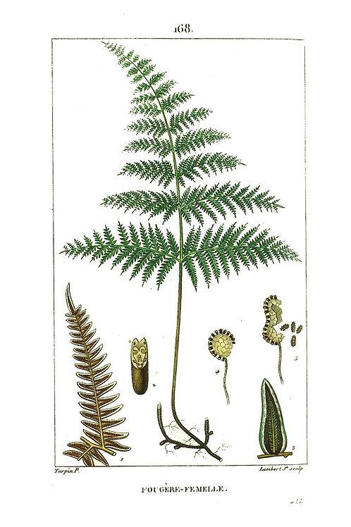 Botanical Print No. 035