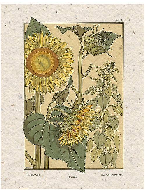 Botanical Print No.55195