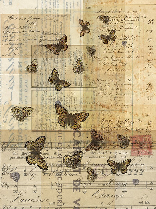 Butterfly Background Print No. 9964