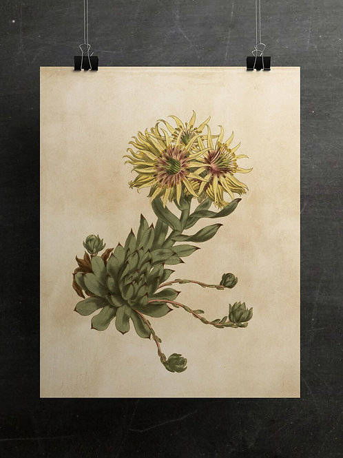 Botanical Print-No. 006