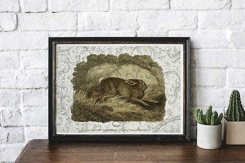 Vintage Hare Collage Print-No.66345