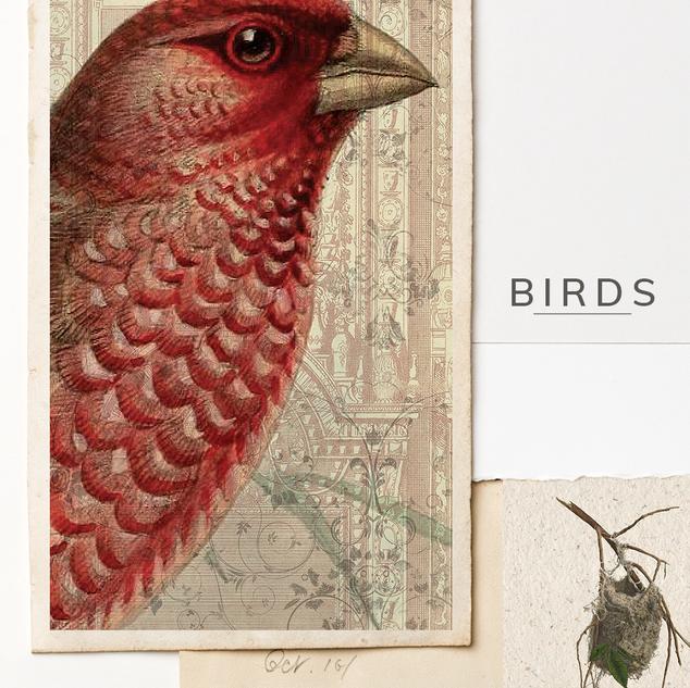 BIRDS C.png