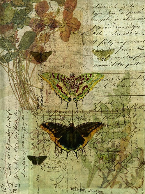 Butterfly Collage No 001